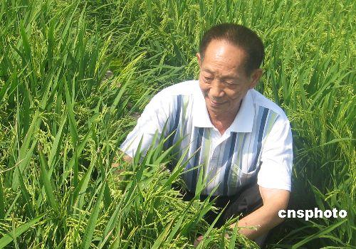 袁隆平与杂交水稻(图片来自网络)
