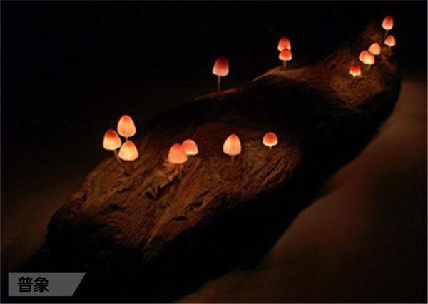 蘑菇灯2.jpg
