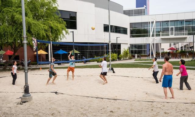 谷歌园区的排球场