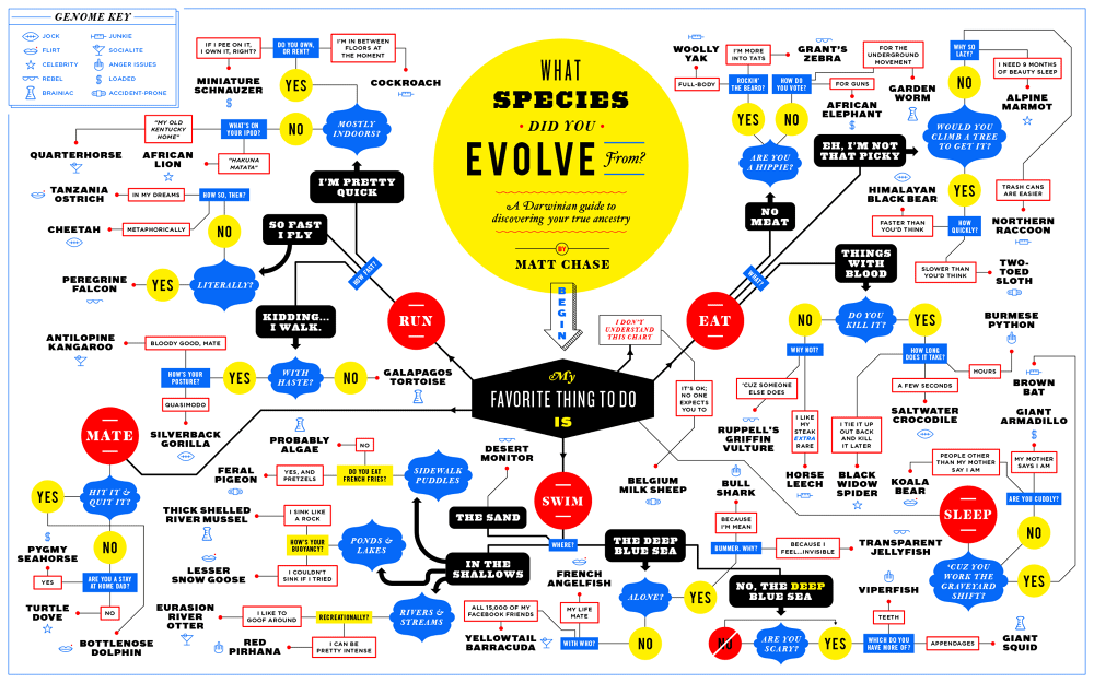 matt-chase-what-species-did-you-evolve-from-flowchart_1_1000