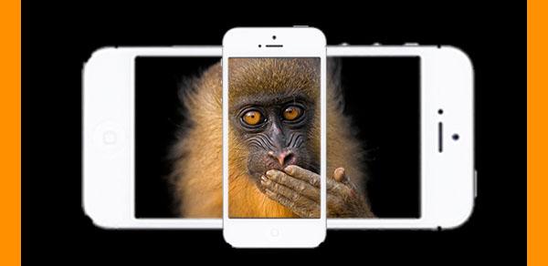 monkey垂直视频2