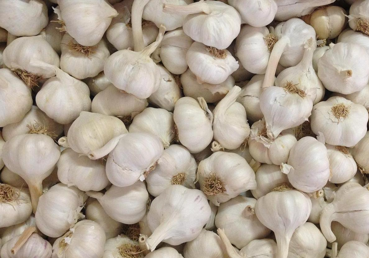 white-garlic-45