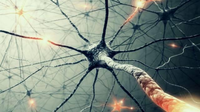 ▲ 人脑的神经元