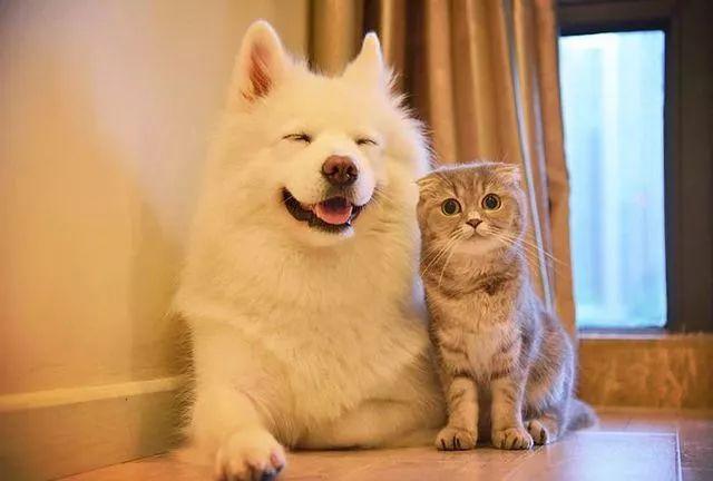 """博主""""马建国""""通过分享这两只宠物的图文,视频,满足了很多""""云吸猫"""","""""""