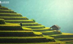 农资零售店,要如何赋能成为互联网+农业落地的入口?