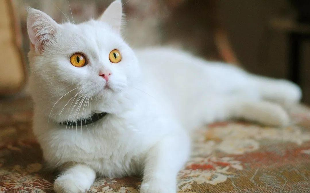 从猫爪杯到噬元兽,谈谈猫咪营销