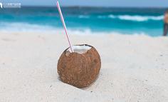 31年坚持在海南岛的椰树,有哪些值得品牌们学习的点?