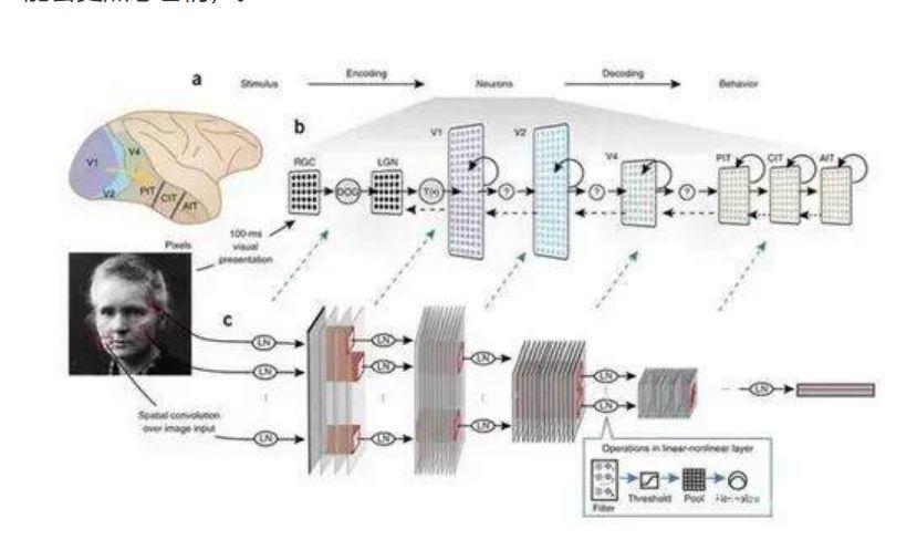 """用图像控制猴子大脑,哈佛大学是如何用算法""""造梦""""的?"""