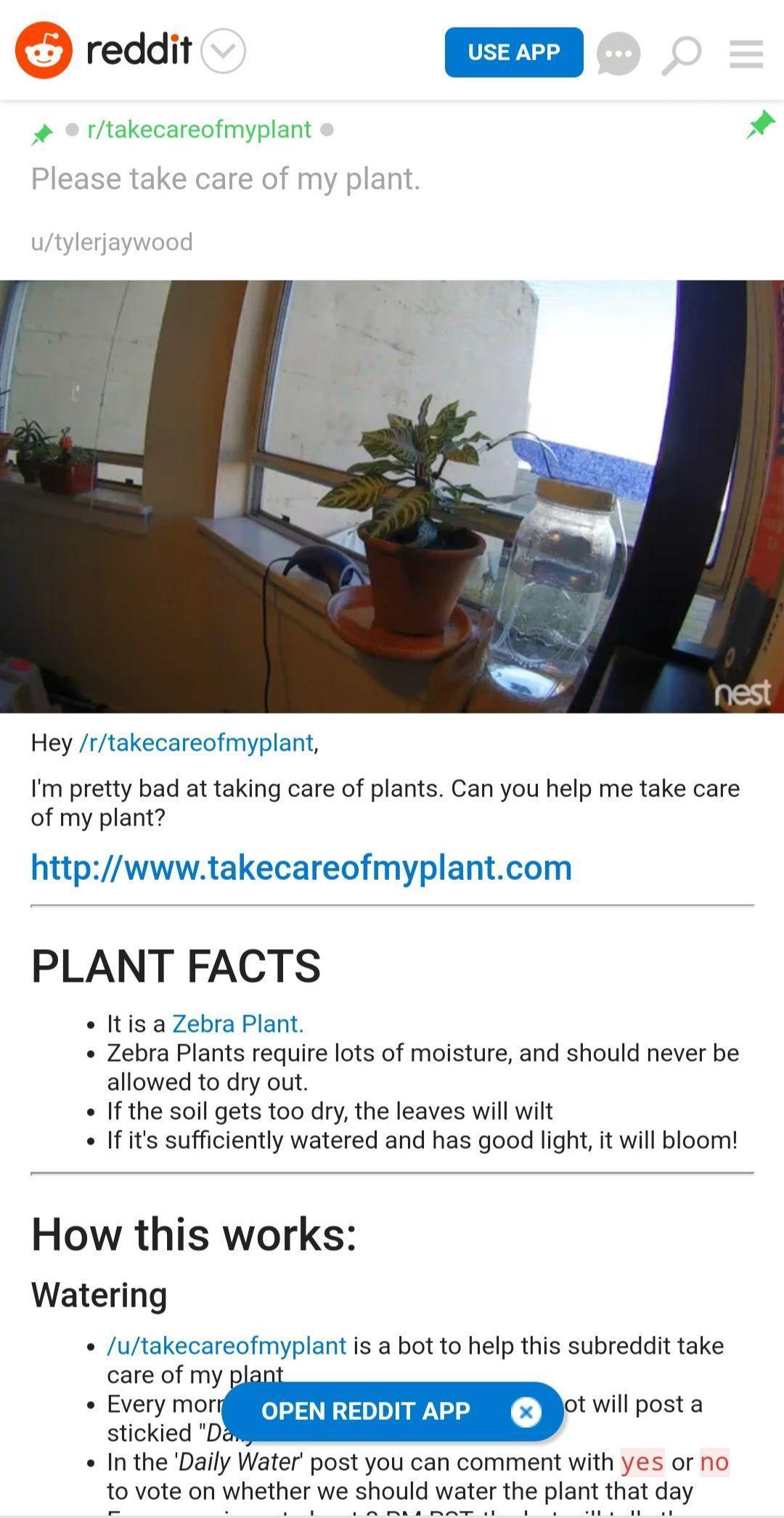 11000个网友,在过去三年里一起养了一盆花