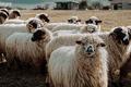 被双十一规则玩死――羊毛党的终极宿命