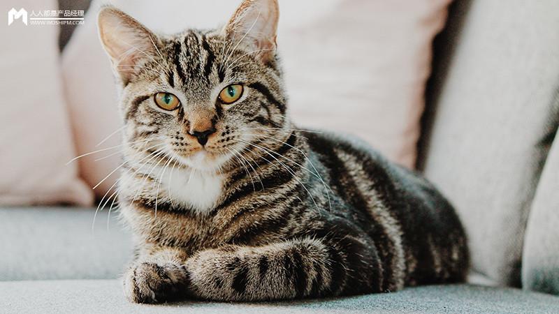 """""""猫经济""""创业:做人的生意,还是猫的生意?(原创)"""