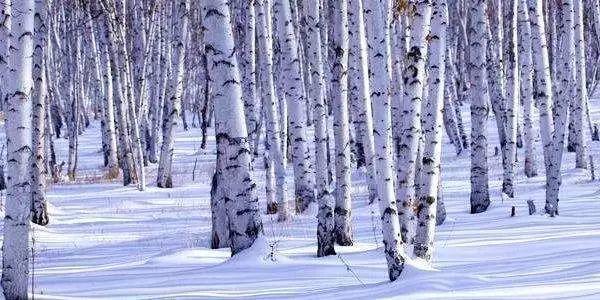 【北方雪原】2019呼伦贝尔冬季落地自驾大穿越