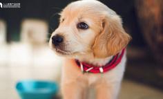 万字长文 | 68款宠物APP产品分析:宠物行业的巨浪淘沙