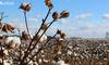 棉花行业的效率问题,如何伴随产业互联网得到提高?