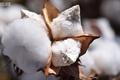 棉花信息平台的产品分析&功能趋势