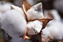 棉花信息平台的产事情都不会生品分析&功能趋势