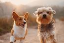 宠物社区是否有成立的可能?