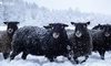 如何查出谁在薅羊毛?