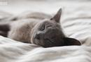 用户画像:喜欢熬夜晚睡的人们,究竟是怎样一个群体?