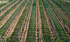 农业模式之B端的食材配送