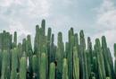 绿洲APP产品分析报告:站在巨人肩膀上能否看得更远?
