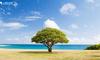 """需求是一棵树,产品经理如何""""种""""?"""