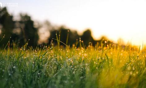 怎么种好朋友圈的草?