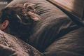 竞品分析:小睡眠VS蜗牛睡眠