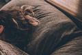 睡眠助眠器产品需求文档