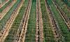 农产品数据运营,该如何操作?