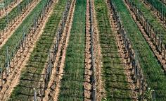 農產品數據運營,該如何操作?