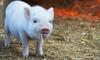 巨头竞相跨界入场,互联网风口能把猪吹多高?