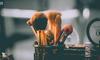 产品分析报告 | 小红书:内容+电商型产品