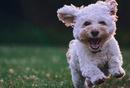 宠物电商:针对宠物人群的电商结构思考