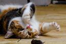 抖音上的猫鼠博弈