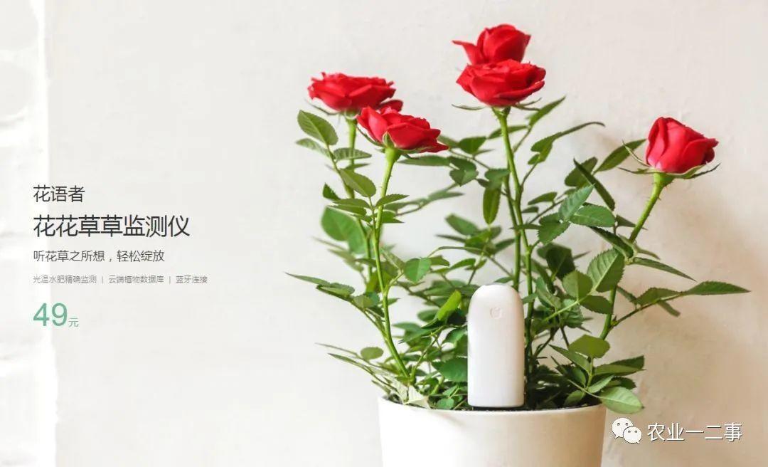 商业模式分析:容易被遗忘的鲜花花卉