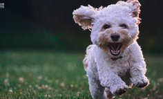 寵物APP競品分析:鈴鐺寵物VS有寵