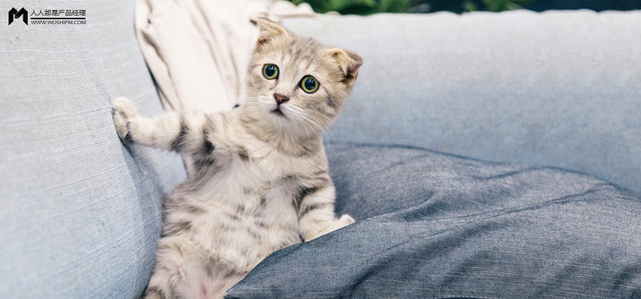 猫星人不仅治愈孤独,更是大型碎