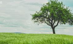 創業就像種樹,不懂大樹理論,難成參天大樹