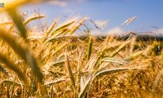 数字农业:农企数字化水平评估模型(附评估细则)