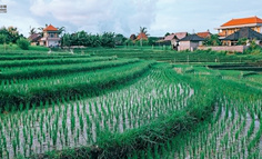 农业蓝海农业者能力模型,提升数字化水平