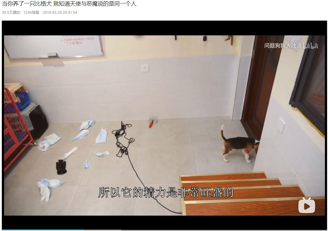 专访 | 宠物经济大行其道,拍视频的训犬师挣到钱了吗?
