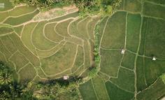 农业未来发展趋势——种植业