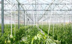 农业创新创业机会点——庄稼医院