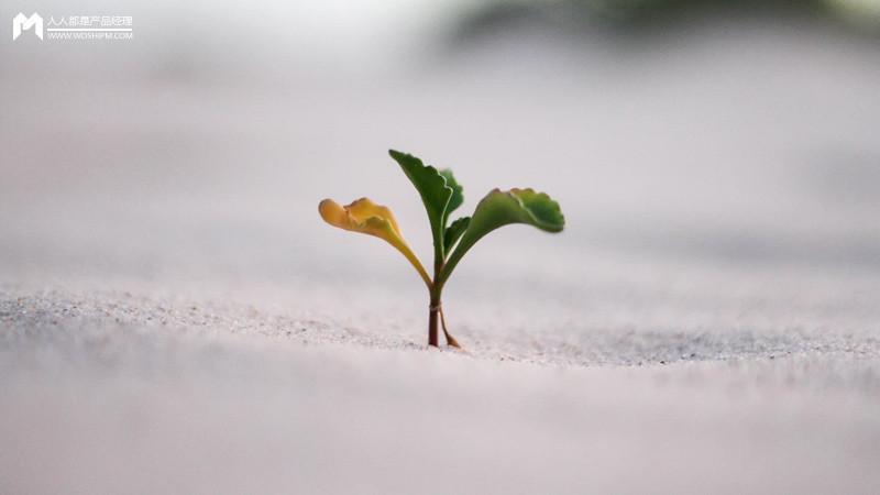 产品经理之「种子」挑选和栽培插图